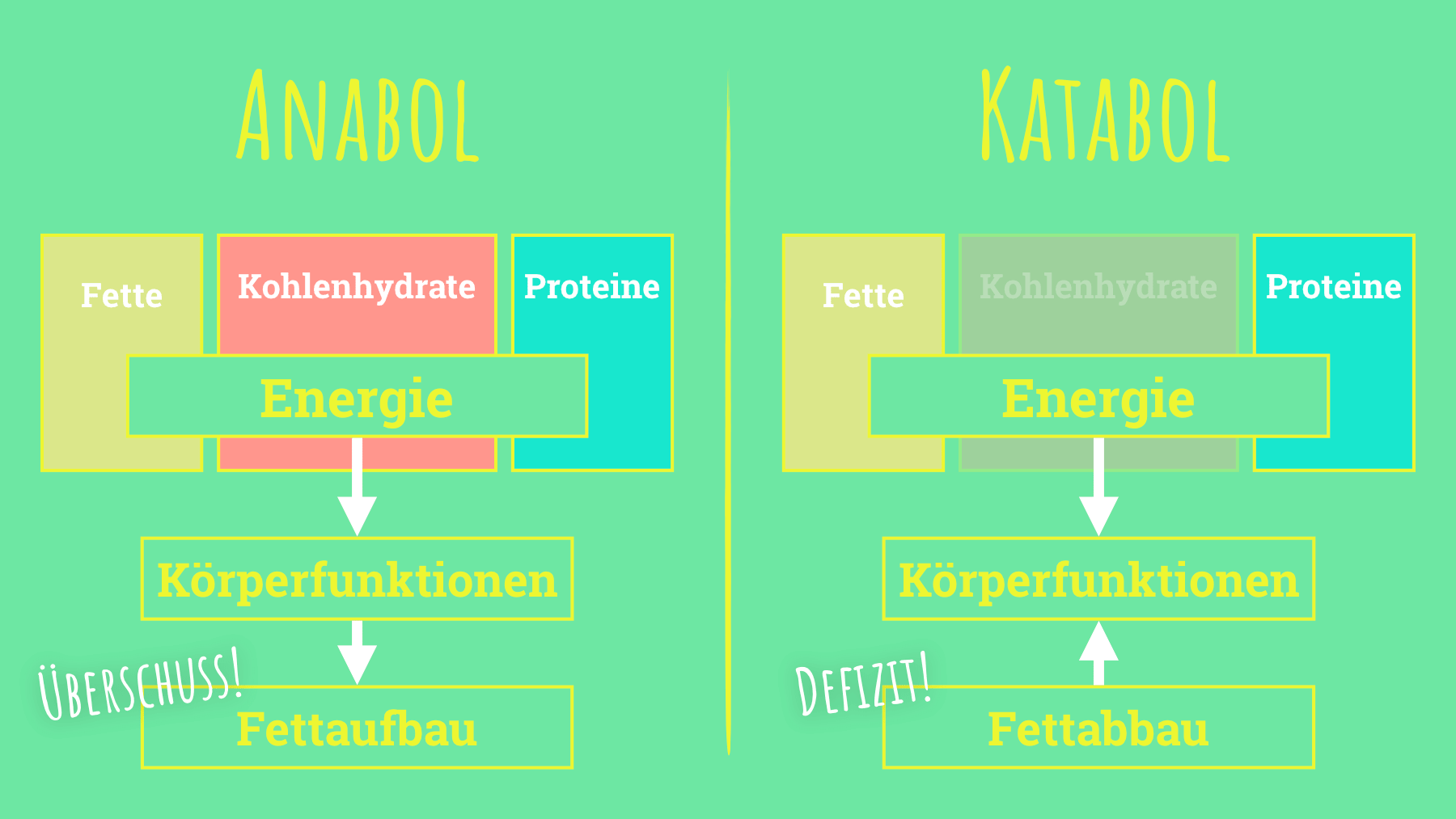 Low Carb Check - Vergleich Anabol vs. Katabol